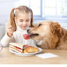 Homemade Christmas treats for your dog Best Dog Food, Best Dogs, Homemade Christmas Treats, Dog Facts, Dog Feeding, Pet Life, Dog Show, Dog Care, Dog Owners