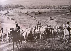The U.S. Army, under General Patton, evacuates the Lipizzaners during WWII