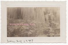 Antique Vintage Photograph~Frozen Waterfall~Winter~Snow~Landscape~January 1947