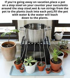 50 Feet Self watering Wick Cord for Vacation Self-watering Planter Pots DIY Automatic Watering Device System Potted Plant Sitter Auto Drip Irrigation Waterer to Water African Violet Cotton String Rope - Plants and garden - Water Plants, Potted Plants, Garden Plants, Indoor Plants, Pots For Plants, Hanging Plants, Tree Garden, Water Garden, Container Gardening