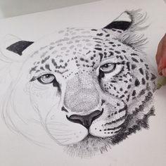 'Sapphira'. Illustration af leopard - Draw Doodles Study