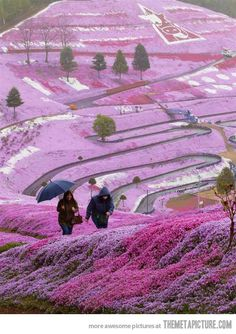 Spring flowers on Hillside, Hokkaido, Japan. Hokkaido is my home land. Places Around The World, The Places Youll Go, Places To See, Around The Worlds, Beautiful World, Beautiful Places, Amazing Places, Beautiful Flowers, Amazing Things