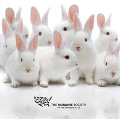 The #HumaneCosmeticsAct has been introduced in the House of Representatives. Take action to end cosmetics animal testing in the U.S.! #BeCrueltyFree. Repin to spread the word!