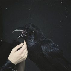 "Leave my loneliness unbroken!quit the bust above my door! Take thy beak from out my heart and take thy form from off my door!"" Quoth the raven ""Nevermore. Potnia Theron, Yennefer Cosplay, The Wicked The Divine, Yennefer Of Vengerberg, The Ancient Magus, Raven Queen, Vegvisir, Witch Aesthetic, Hades Aesthetic"