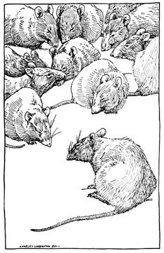 Vintage drawing of rats by Charles Livingston Bull (1874 - 1932). Black and white, pen and ink style drawing in the public domain.