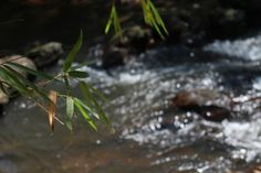 Folhas e água