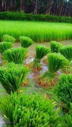 Village Photography, Nature Photography, Incredible India, Amazing Nature, Agriculture In India, Cool Pictures, Beautiful Pictures, The Lost World, Nature Scenes