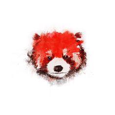 Red Panda (White) Art Print by Zach Terrell - X-Small Red Panda Cute, Panda Love, Bristol Zoo, Animal Art Prints, Panda Art, Art Prints For Sale, My Spirit Animal, White Art, Love Art