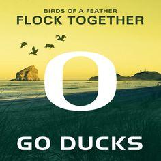 2704 Best Oregon Ducks Images In 2019 University Of
