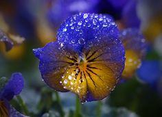 Drops… by piet fotograaf / Nourish Your Soul