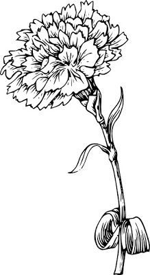 I want to get a carnation flower tattoo but i can't find any cute drawings or sketches can someone please help me find one? Carnation Drawing, Carnation Flower Tattoo, Birth Flower Tattoos, Red Carnation, Birth Month Flowers, January Birth Flowers, Marigold Tattoo, Marigold Flower, January Flower