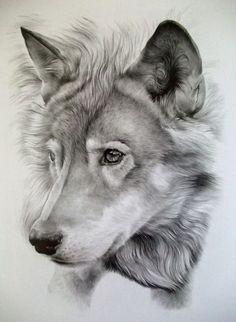 Resultado de imagem para lobos desenhos