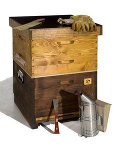 Cool Buchcover Wesensgem e Bienenhaltung in der Bienenkiste garten und terasse Pinterest Und Medium and In