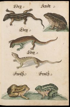 Krustentiere, Fische, Amphibien u. Reptilien - Zentralbibliothek Zürich