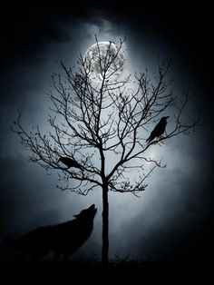 the wolf and two ravens against the full moon