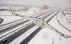 A CCTV traffic camera in Canada is getting high praise for its photography skills this week after shooting a series of beautiful photos of a snowy owl flying directly toward it.CanadianQuebec's minister of transportation, Robert Poëti, shared some of the still frames on Twitter and Facebook earlier t