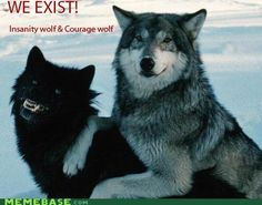 courage wolf and insanity wolf behind the memes.  LOVE them so funny