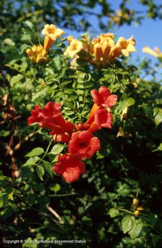 Texas Native Plants Database