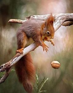 Nature Animals, Animals And Pets, Baby Animals, Squirrel Pictures, Animal Pictures, Woodland Creatures, Woodland Animals, Cool Pets, Cute Dogs