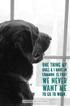 One Thing My Dog & I Have In Common.... Dog, Dog Quotes, Inspirational Quotes, Funny Quotes, Life Quotes