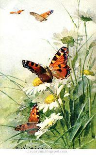 Divided Back Postcard Painting of BUtterflies C. Butterfly Painting, Butterfly Flowers, Beautiful Butterflies, Flower Art, Rose Flowers, Watercolor Flowers, Watercolor Paintings, Catherine Klein, Art Vintage