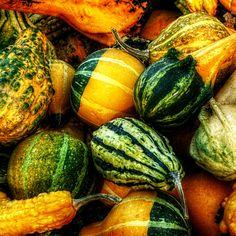 Harvest Bounty / Image via: Pixler #fall #autumn #market