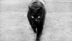 Prowl by me on 500px - Ft. my oldest panther, Ida. <3