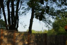 Apple tree+ debarked willow = great mix #TheGreenBarrier #fence #backyard #privacy