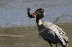 Spearfishing Success #4  IMG_8064 by ferrisakel, via Flickr