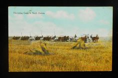 1910s Harvesting Grain in North Dakota Farming Horses Farm Machinery ND Postcard