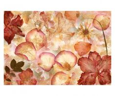 Brewster x - Dried Flowers - Unpasted Non-Woven Mural - 8 Panels Wall Coverings Wallpaper Murals Flower Collage, Flower Wall, Poster Mural, Brewster Wallpaper, Wall Murals, Wall Art, Photo Mural, Decoupage Art, Wallpaper Roll