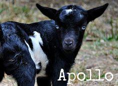 Apollo With Text