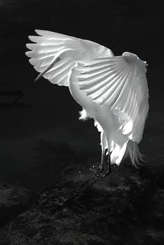 0hmm:  Walk Without Feet, Fly Without Wings and Think Without Mind…https://youtu.be/2JdL5J_2QKcoohhmm…ॐ