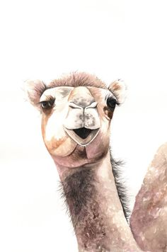 Camel Painting  Print of watercolor painting A4 by Splodgepodge, $20.00