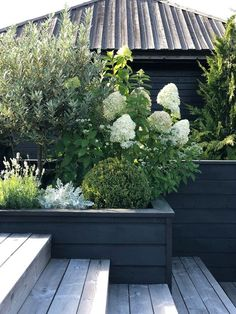 Front Garden Landscape, Garden Paths, Landscape Design, Outdoor Landscaping, Outdoor Plants, Outdoor Gardens, White Gardens, Back Gardens, Dream Garden