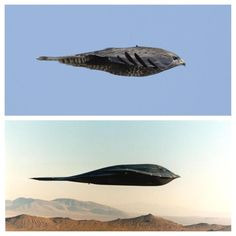 TwistedSifter Nature-inspired design aka 'Biomimicry' Bird = Hawk Plane = Northrop Grumman B-2 Spirit