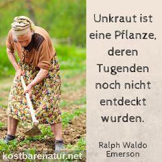 Unkraut ist eine Pflanze, deren Tugenden noch nicht entdeckt wurden. - Ralph Waldo Emerson
