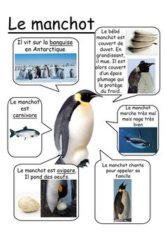 Fiche manchot French Education, Kids Education, Science Activities, Science Projects, Alternative Education, Polar Animals, French Classroom, French Resources, Animal Habitats