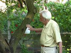 Fagyrepedések gyógyítása a kertben - YouTube