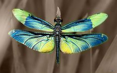 Dragonfly 6x6 Inch Tile Mold for Fusing Glass - The Avenue Stained ...