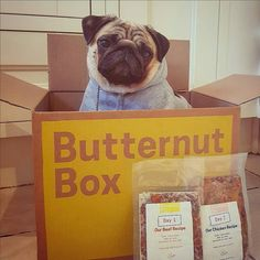 Everyone meet #Butternutter Barry!  Barry is a TV sensation and a lover of all things fancy. His taste in both food and fashion is paw-sibly the finest weve seen  its hard to say but Barry may have a better pawdrobe than our Graphic Designer Christy (and her clothes are AWESOME!) @barry_the_puggy  #ButternutBox #Realgoodtimes #Justdogit . . . . . #happy #positivevibes #dog #dogs #dogsofinsta #dogsofinstagram #dogstagram #instadog #dogfood #yourdog #love #doglover #uk #ukbusiness…