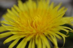 flower power;macro-photography