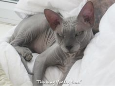 Admin's Soup of the Day! 7.22.15 http://sphynxlair.com/community/threads/admins-soup-of-the-day-7-22-15.32500/ #sphynx #sphynxcat #sphynxlair