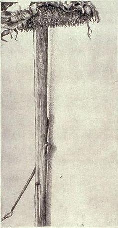 untitled ~ etching ~ by sarah  horowitz