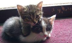 Kitties Huggin'