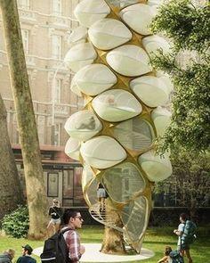 O projeto Tree Hopper conta com uma escada para os visitantes acessarem alojamentos que se parecem com casulos de abelhas. -- Siga no Snapchat:ecavalcanti