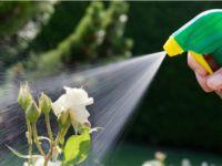 Comment fabriquer un insecticide naturel ?