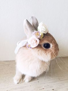 Pets flower crown wedding spring rose doll hair by lalapinhandmade Baby Animals Super Cute, Cute Baby Bunnies, Cute Little Animals, Animals And Pets, Funny Animals, Small Animals, Fluffy Bunny, Cute Animal Pictures, Pet Birds