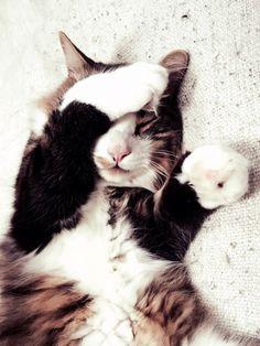 Can I finish my nap? @yummypets