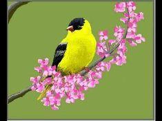 Resultado de imagem para bird painting